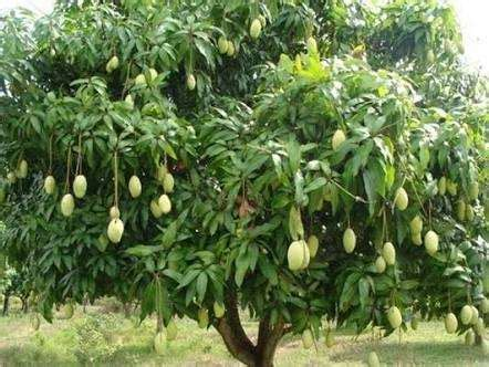 What are some examples of a terrestrial plant? - Quora