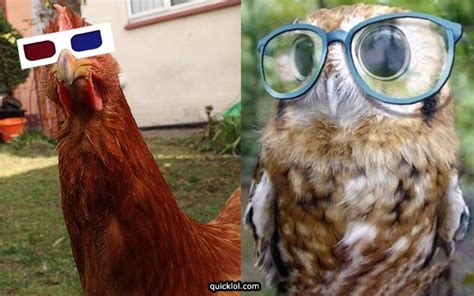 Funny Pictures Of Animals Wearing Glasses