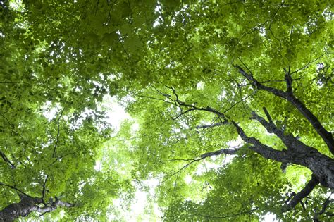 Free photo: Green Trees - Bird's eye view, Forest, Green